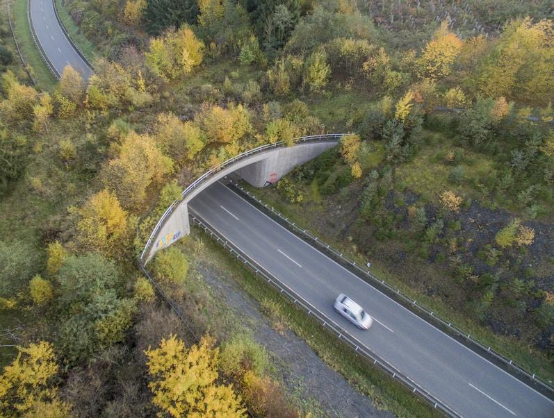 Grünbrücken – Forum Natur beklagt katastrophale Fehlplanung der Naturschutzverwaltung