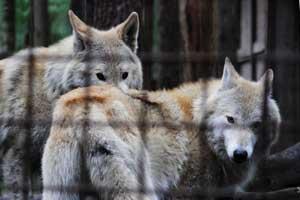 Landnutzer wünschen Wolfszentrum in Groß Schönebeck viel Erfolg