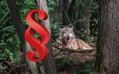 Gehört der Wolf ins Jagdrecht?