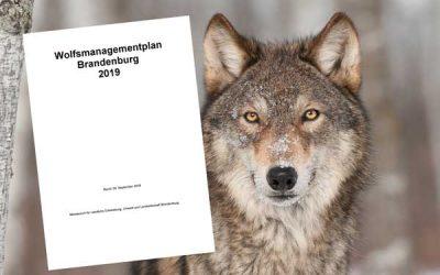 Brandenburger Wolfsmanagementplan überarbeitet