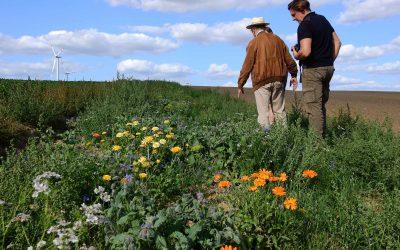 Beetle Banks – Landwirte bringen die Artenvielfalt zurück auf den Acker!